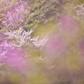 春の花色1-3