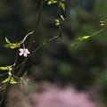 春の花色2-3