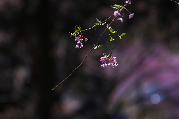 春の花色2-4