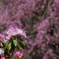 石楠花1-3