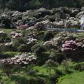 石楠花の里・3