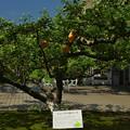 ニュートンのリンゴ