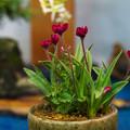 小品盆栽展1-4