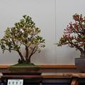 花遊び展1-6