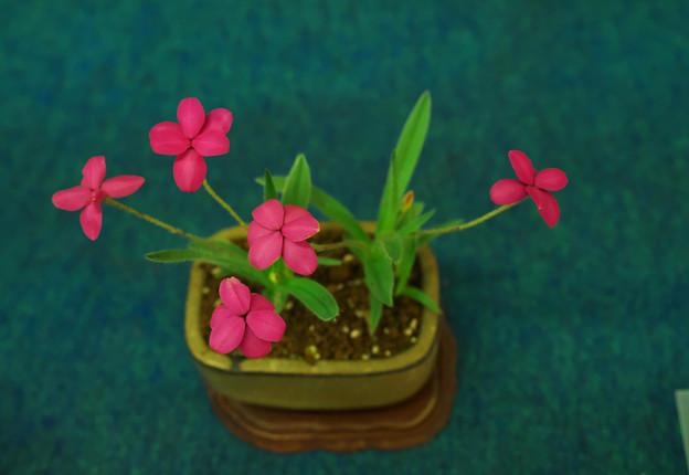 小盆栽展2-1
