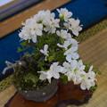 小盆栽展2-4