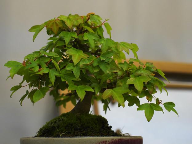 小盆栽展2-6