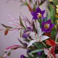 Photos: 花遊び展 6-5