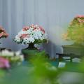 サツキ盆栽展4-1