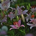 写真: 花通り_2