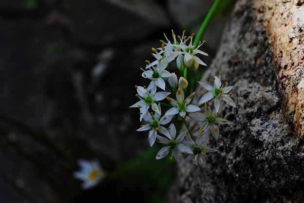 小 花1_1
