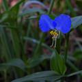 小 花1_2