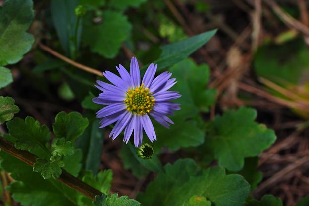 小 花1_5