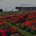 写真: 花の谷3-2