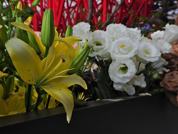 ゆめ花の宴_2