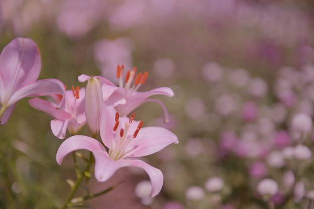 花通り15-1