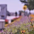 花通り16-1