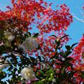 秋の彩り1-3