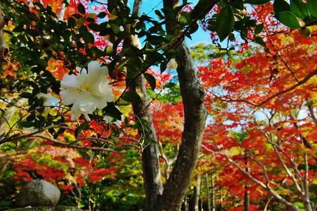 秋の彩り2-2