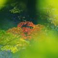 秋の彩り2-4