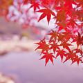 紅葉_香山公園1-1