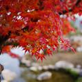 紅葉_香山公園1-2
