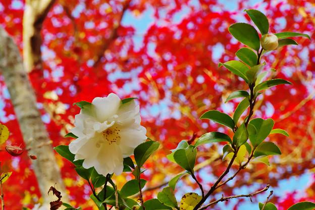 秋の彩り3-2