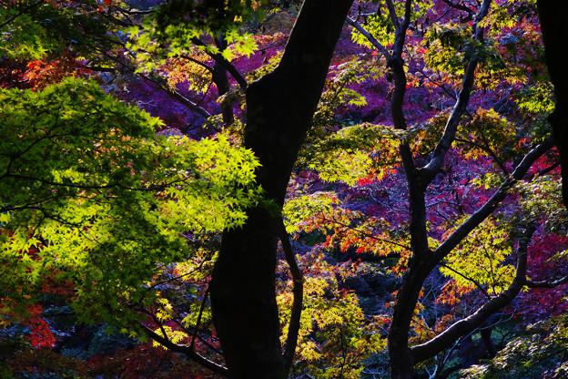 秋の彩り3-4