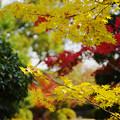 紅葉_毛利氏庭園4-1