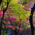 秋の彩り4-4