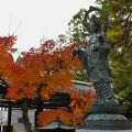 秋の彩り6-3