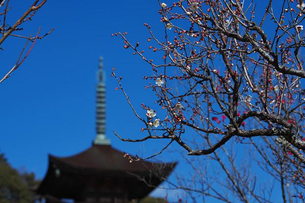 梅と 五重塔1-1