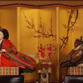 Photos: 萩古雛祭り5-3