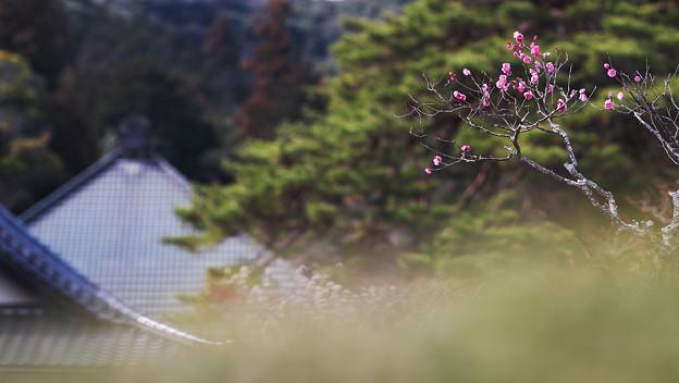 Photos: 梅花9-4