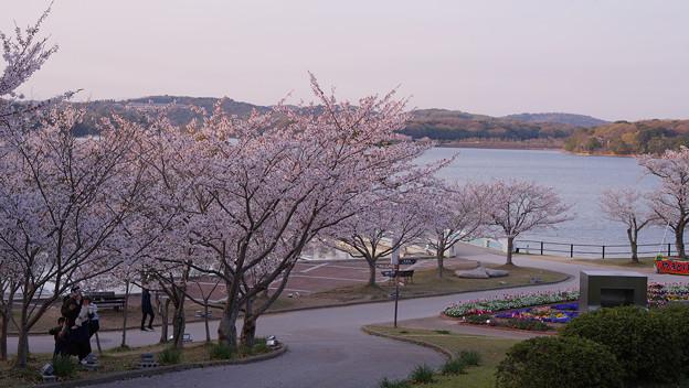 春・ときわ公園2-1