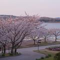 Photos: 春・ときわ公園2-1