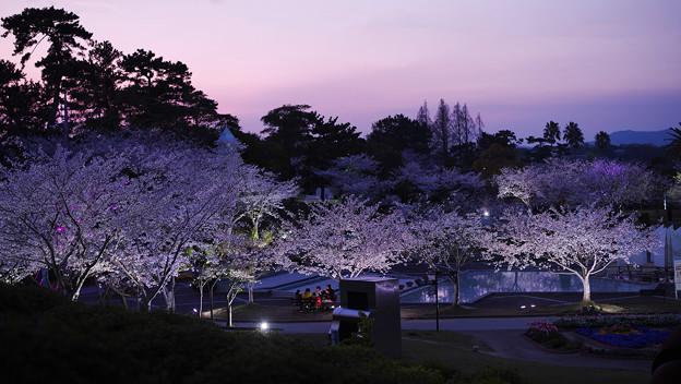 春・ときわ公園2-6