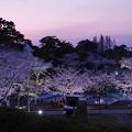 Photos: 春・ときわ公園2-6