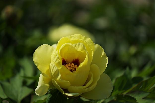 黄 冠(おうかん)