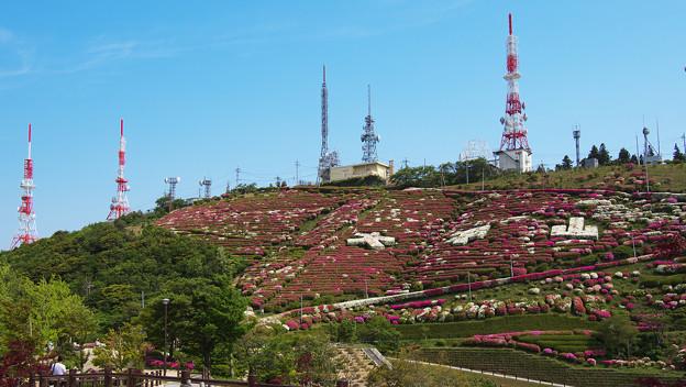 大平山・山頂公園のツツジ1-5