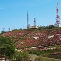Photos: 大平山・山頂公園のツツジ1-5