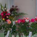 春バラ展1-2
