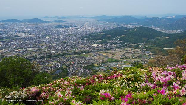 大平山・山頂公園のツツジ3-1