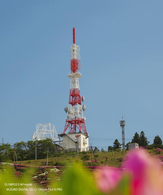 大平山・山頂公園のツツジ3-2