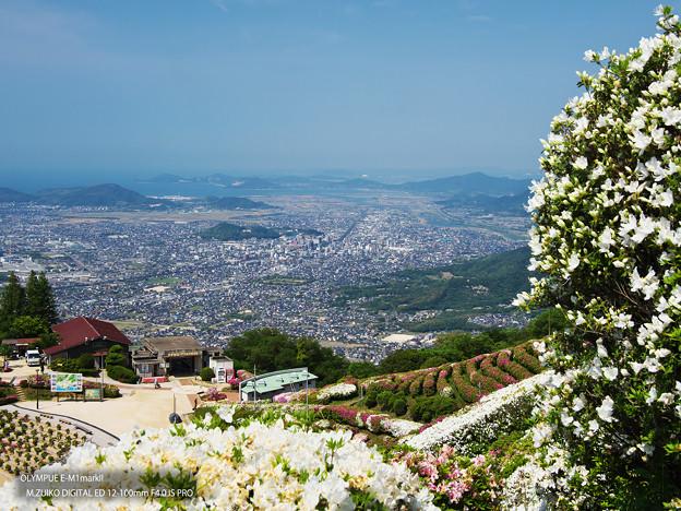 大平山・山頂公園のツツジ3-5