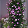 春のバラ展3-2