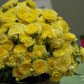 Photos: 春のバラ展3-5