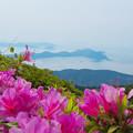 Photos: 大平山・山頂公園のツツジ5-3