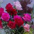 春のバラ展7-2