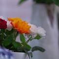 春のバラ展7-3
